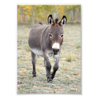 Donkey Greeting Photo Print