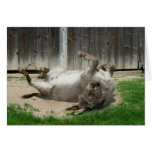 Donkey Having A Bath Cards