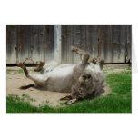 Donkey Having A Bath Greeting Card