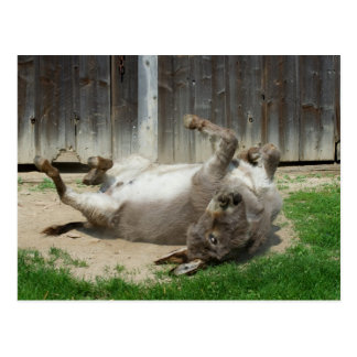 Donkey Having A Bath Postcard
