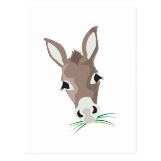 Donkey Head Postcard