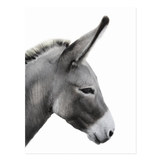 Donkey Head Profile Postcard