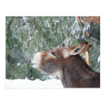 Donkey Holiday Postcard
