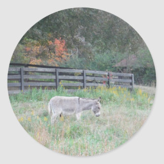 Donkey in a Fall Autumn Field. Classic Round Sticker