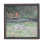 Donkey in a Fall Autumn Field. Premium Gift Box