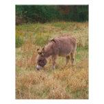 Donkey  in a Fall Field. Custom Letterhead