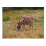 Donkey  in a Fall Field. Postcards