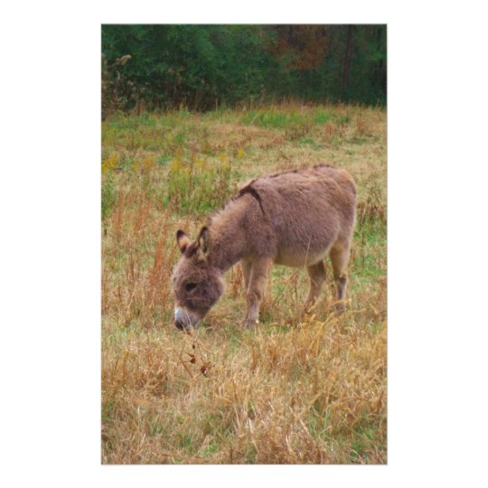 Donkey  in a Fall Field. Stationery