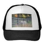 Donkey in an Autumn Field Hat
