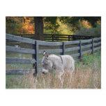 Donkey in an Autumn Field Postcard