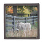 Donkey in an Autumn Field Premium Gift Boxes