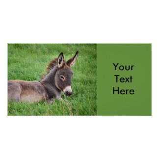 Donkey In The Grass Card