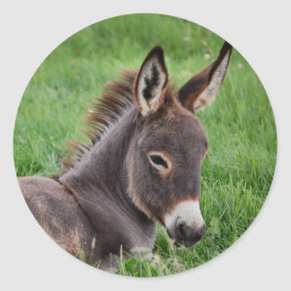 Donkey In The Grass Classic Round Sticker