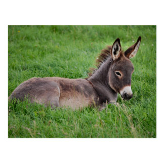 Donkey In The Grass Postcards