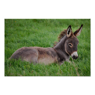 Donkey In The Grass Poster