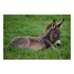 Donkey In The Grass Posters