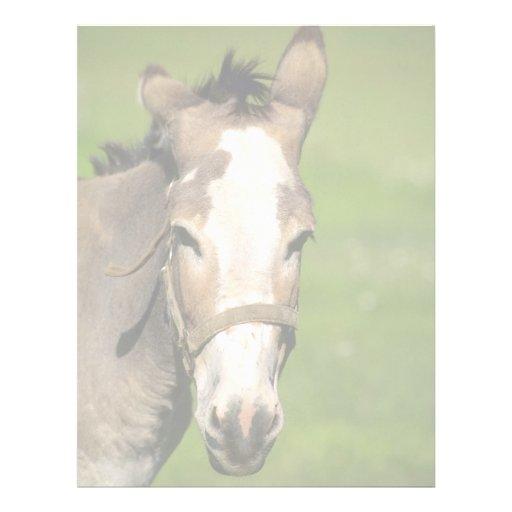 Donkey Letterhead
