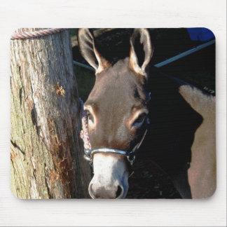 donkey looking at camera mouse pads