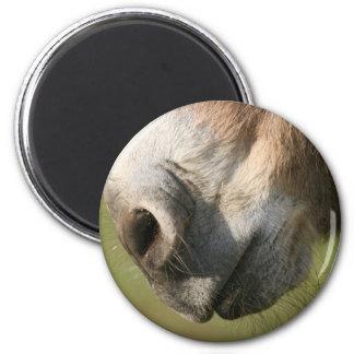 Donkey Magnet