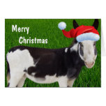 Donkey Merry Christmas Greeting Cards