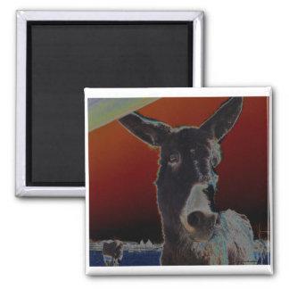 Donkey on Dark Red 2 Inch Square Magnet