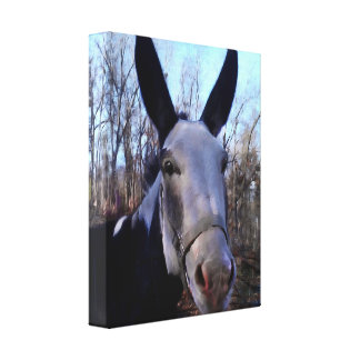 Donkey Painting Canvas Print