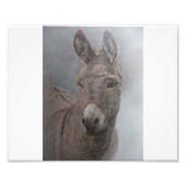 Donkey Photo Print