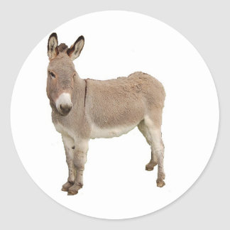 Donkey Photograph Design Round Stickers