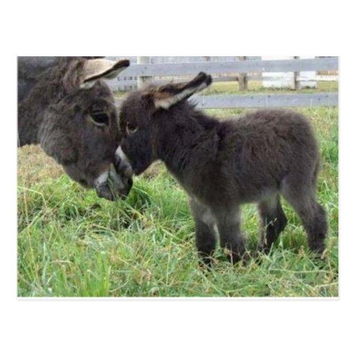 donkey post cards