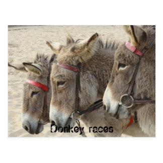 Donkey races post card