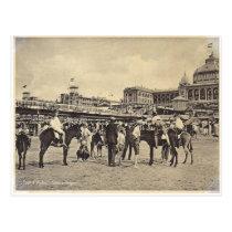 Donkey rides, Scheveningen 1906 Postcard
