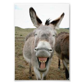 Donkey Smile Photo Print