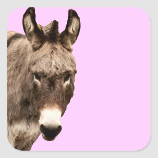 donkey square stickers
