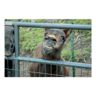 Donkey Sticking Tongue Out Photograph Print