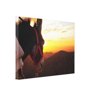 Donkey Watching the Sunset Canvas Print
