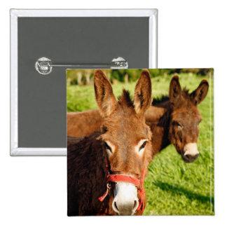 Donkeys Button