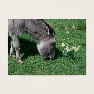 Donkeys Don't Eat Wild Daffodils Business Card