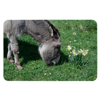Donkeys Don't Eat Wild Daffodils Magnet