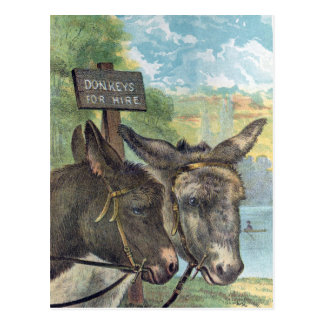 Donkeys For Hire Postcard