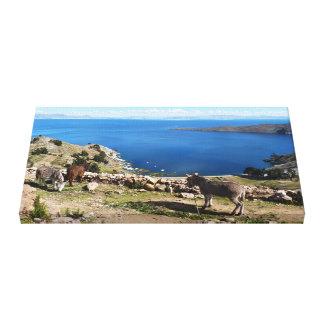 Donkeys' paradise canvas print