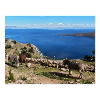 Donkeys' paradise postcard