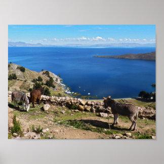 Donkeys' paradise poster