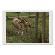 Donkeys Photo Poster
