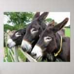 Donkeys! Print