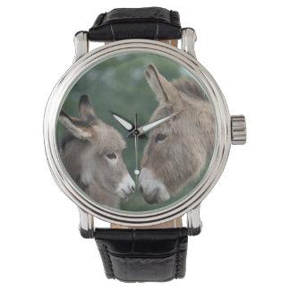 Donkeys watch