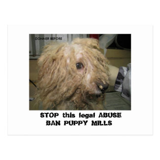 DonnerBichon12-10-08 (42),  STOP this legal ABU... Postcard
