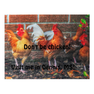Don't Be Chicken Postcard