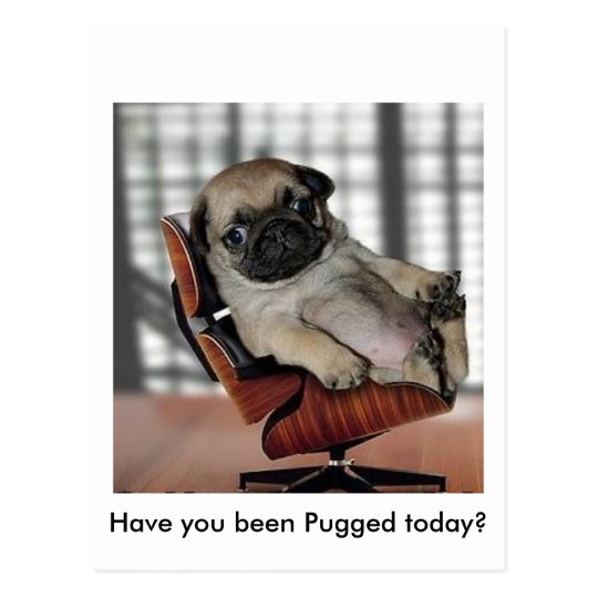 Don't be Pugnacious! Postcard