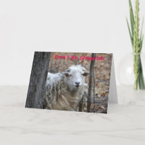 Don't Be Sheepish Valentine Card
