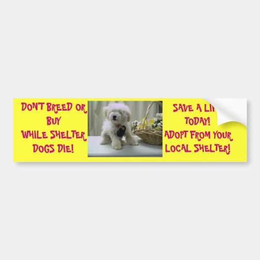 DON'T BREED OR BUY! ADOPT CAR BUMPER STICKER